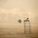 Birds are seen on a smoggy morning in New Delhi